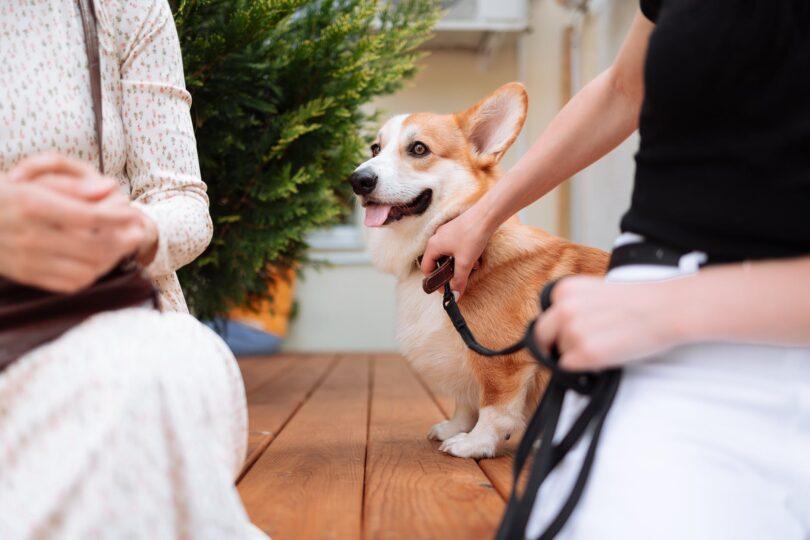 Barkbox (BARK) is the pet industry's surging trojan horse